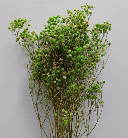 Baby Breath Dried Flowers/ Fillers (Imported) - Green