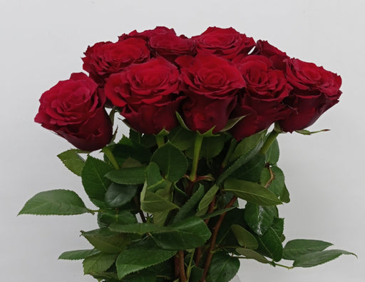 Rose (Et) 40cm (Imported) - Red