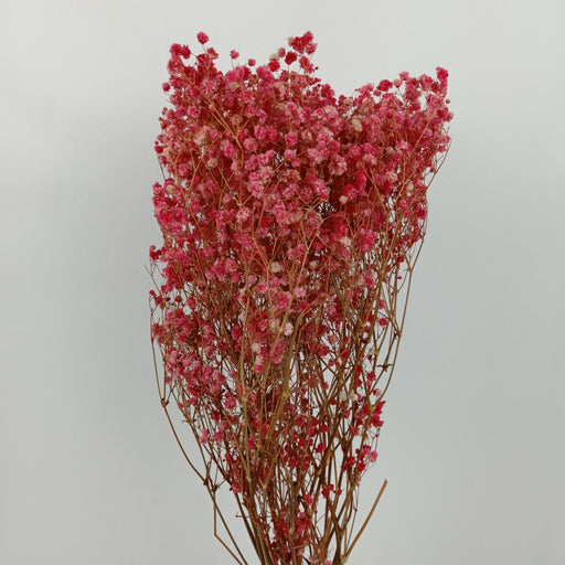 Baby Breath Dried Flowers/ Fillers (Imported) - Red