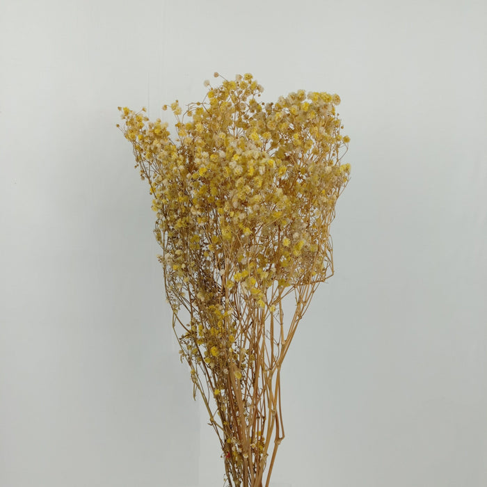 Baby Breath Dried Flowers/ Fillers (Imported) - Yellow