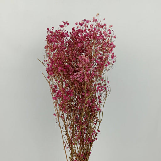 Baby Breath Dried Flowers/ Fillers (Imported) - Pink