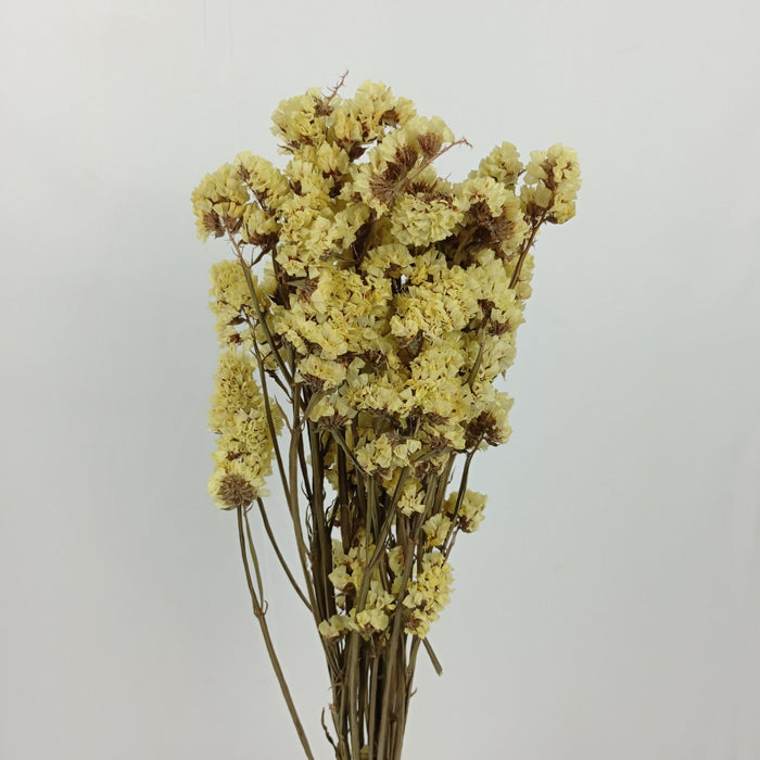 Statice Dried Flowers/ Fillers (Imported) - Yellow