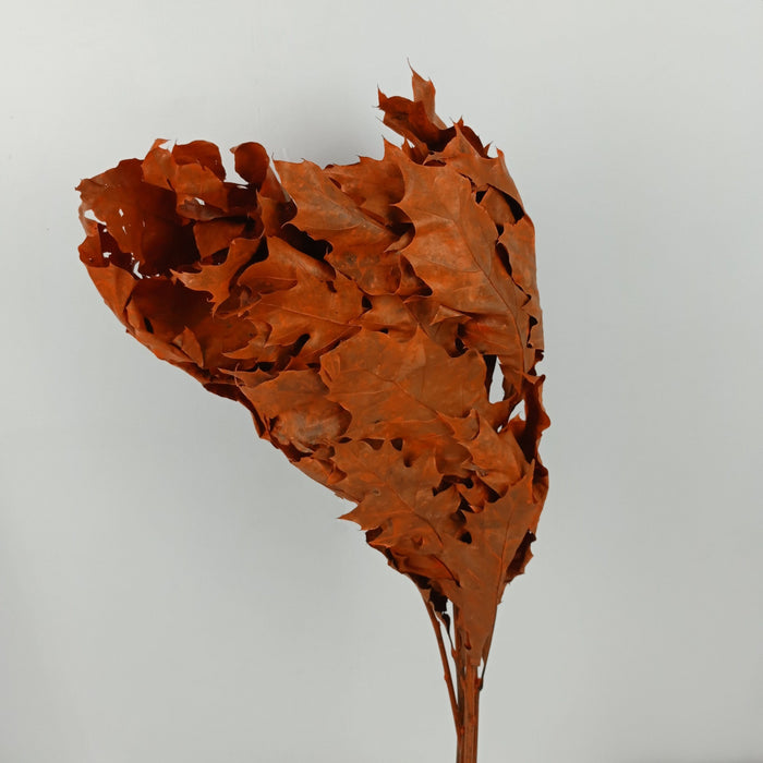 Oak Leaves Mix (Imported) - Brownish