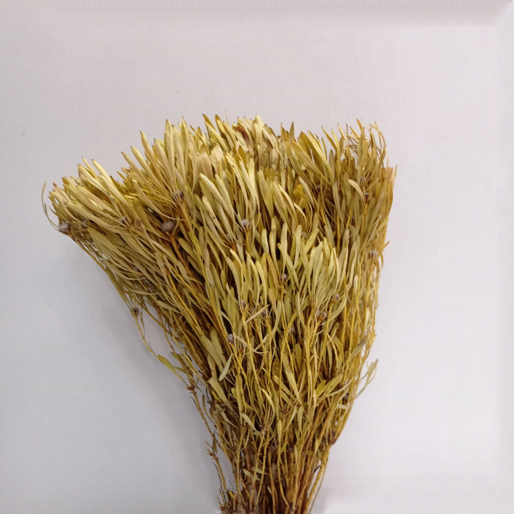 Dried Bouquet (Imported)