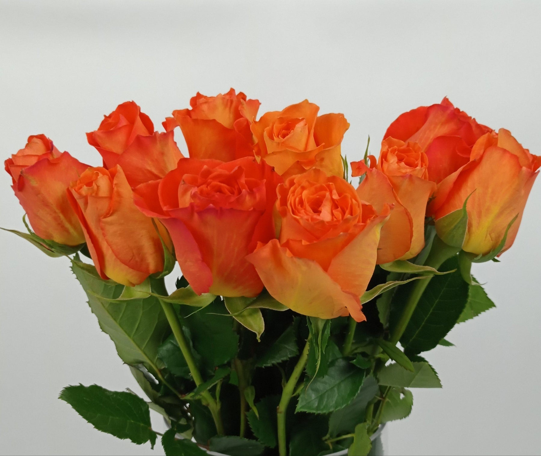 Rose (Imported) - Orange