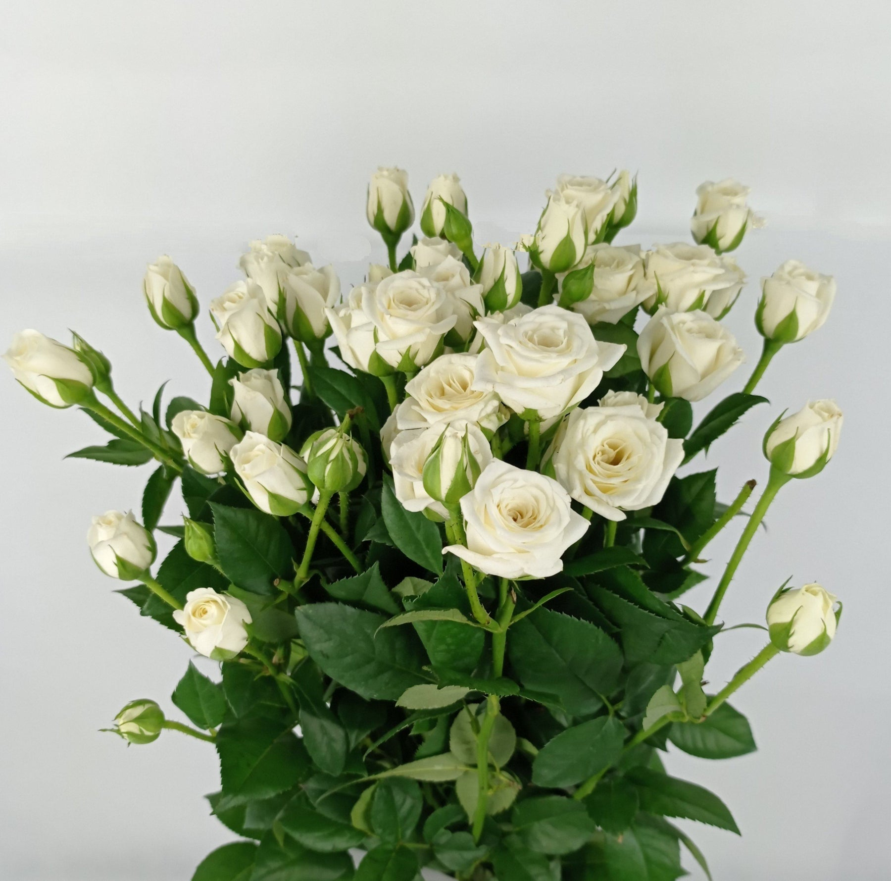 Spray Rose (Imported) - White