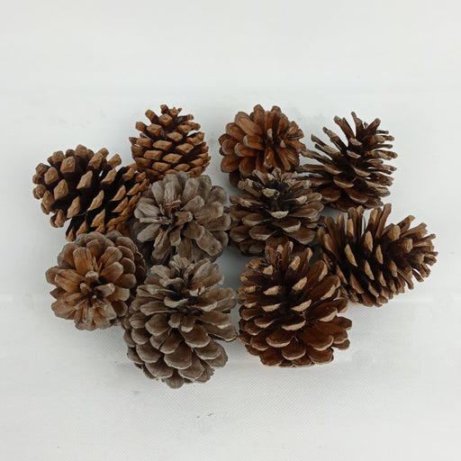 Pine Cone 5pcs/ Pack (Imported)