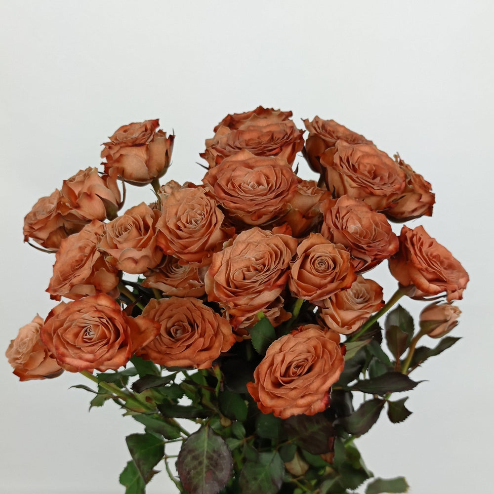 Rosa Spray Painted (Imported) - Brown