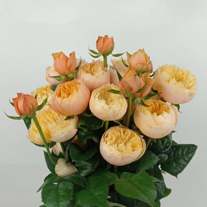 Spray Rose (Imported) - Yellow