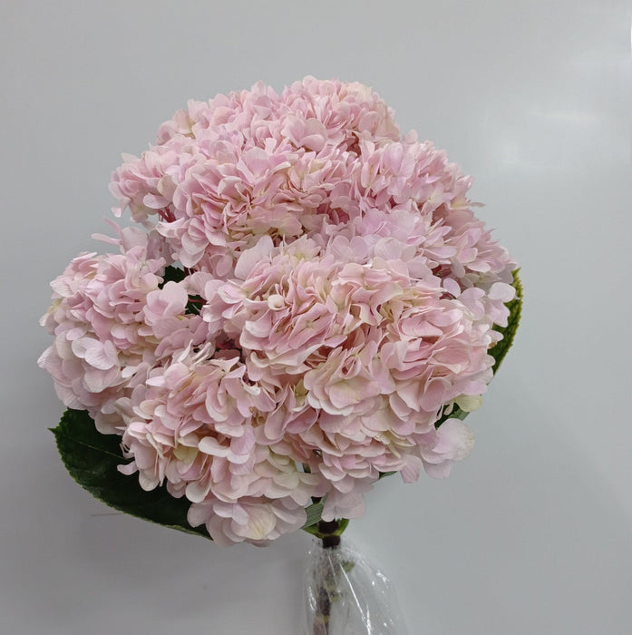 2 Stems of Hydrangea (Local) - Pink