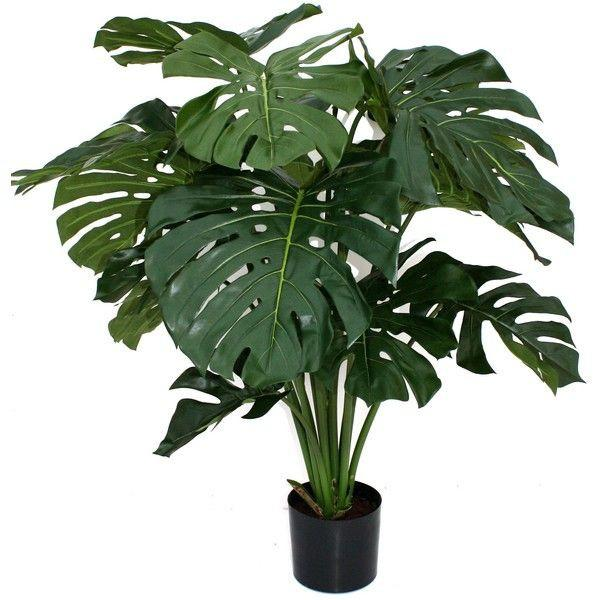 Pot Monstera Delicious 4-5Ft (Local) - Green