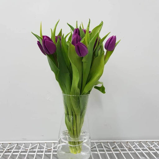 Tulip in Vase - Purple