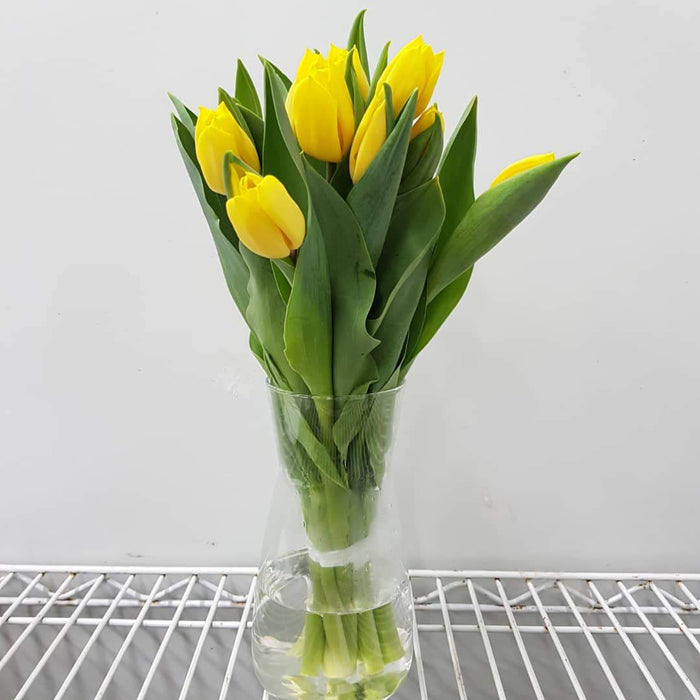 Tulip in Vase - Yellow