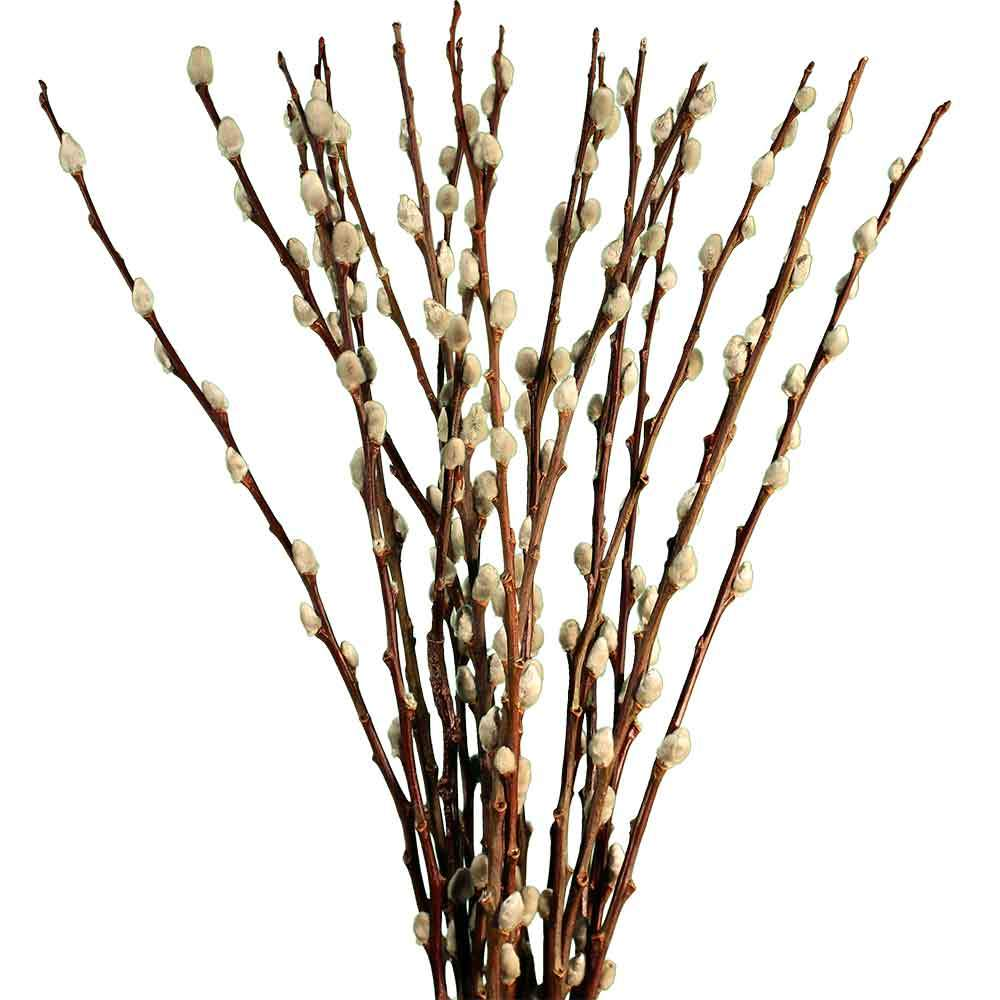 Pussy Willow - Natural