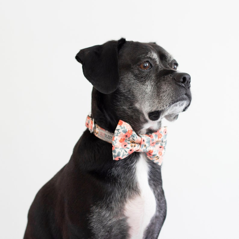 Floral Bow Tie Dog Collar