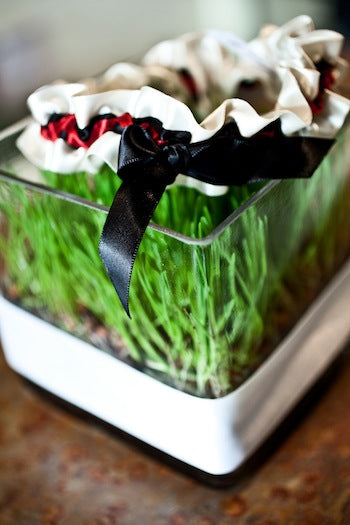 Ivory-red-garter-on-bed-of-grass-The-Garter-Girl-by-Julianne-Smith