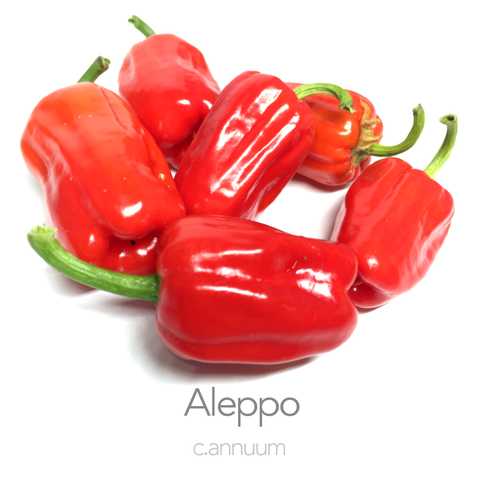 Aleppo Chilli Seeds (c.annuum)