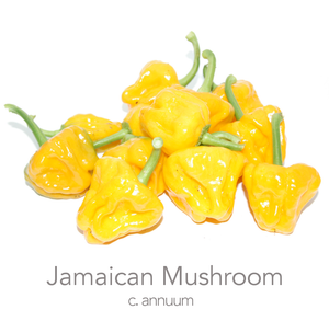 Jamaican Mushroom Yellow Chilli Seeds (c.annuum)