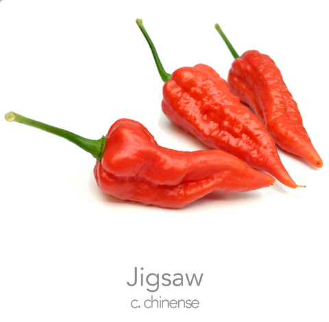 Jigsaw Chilli Seeds (c.chinense)