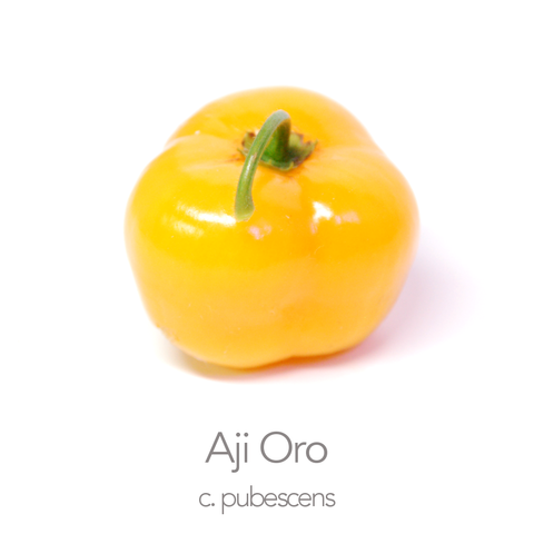 Aji Oro Chilli Seeds (c.pubescens)