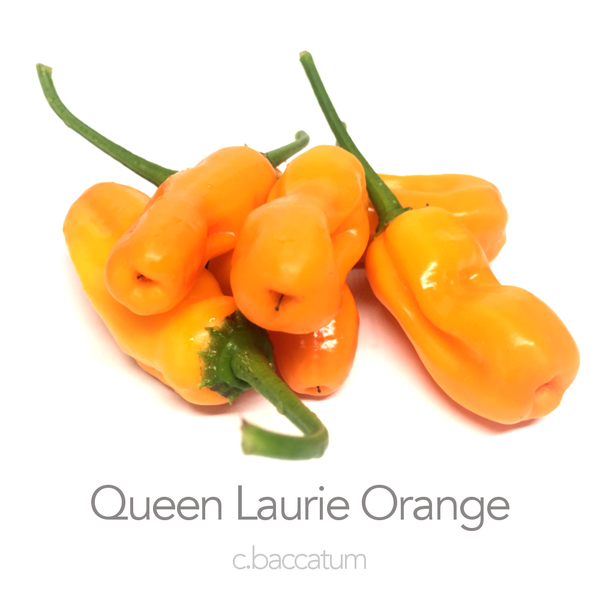 Queen Laurie Orange Chilli Seeds (c.baccatum)