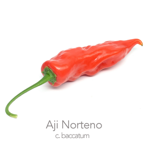 Aji Norteno Chilli Seeds (c.baccatum)