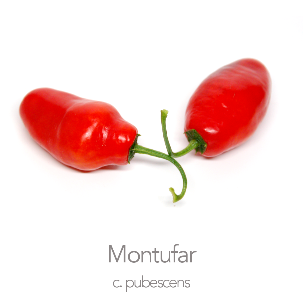 Montufar Chilli Seeds (PI 585273) (c.pubescens)
