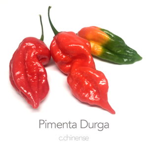 Pimenta Durga Red F3 Chilli Seeds (c.baccatum)