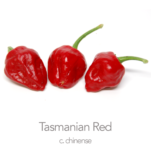 Tasmanian Red Chilli Seeds (c.chinense)