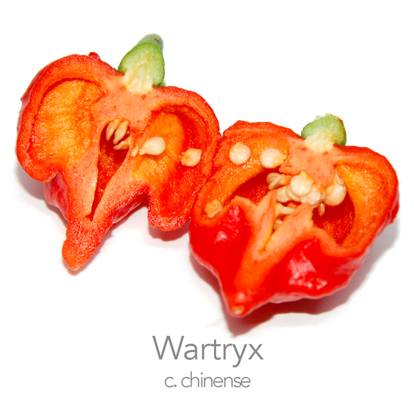 Wartryx Chilli Seeds (c.chinense)