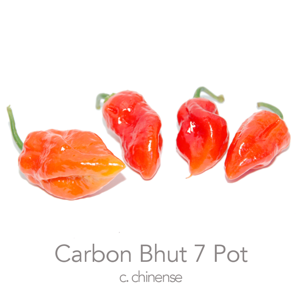 Carbon Bhut 7 Pot Chilli Seeds (c.chinense)