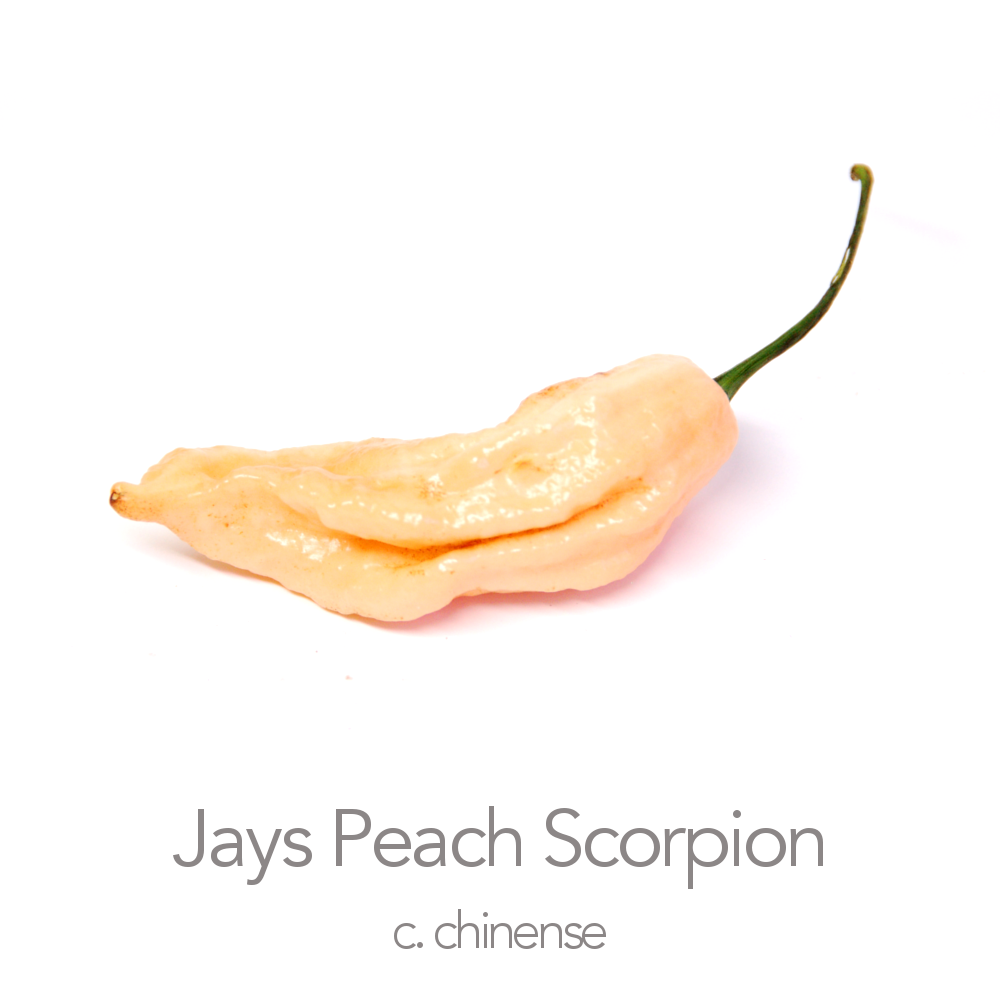 Jays Peach Ghost Scorpion Chilli Seeds (c.chinense)