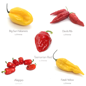 5 x Hot Chilli Seed Varieties (Money Saving Bundle No3)