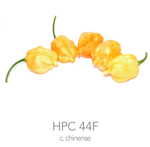 HPC 44F Peach Chilli Seeds (c.chinense)