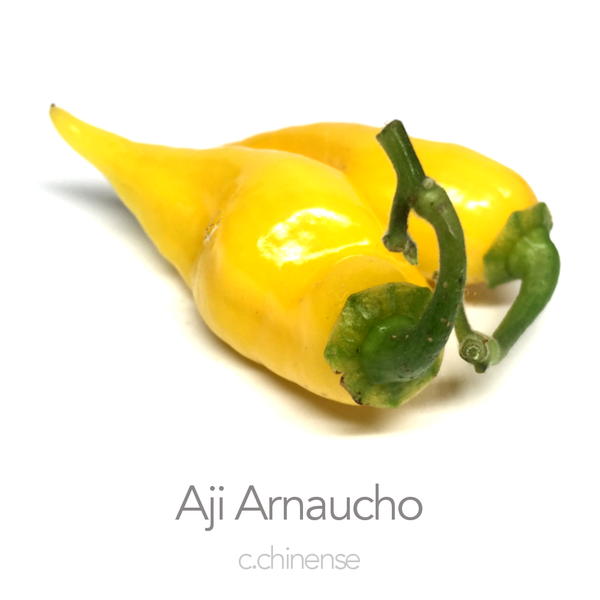 Aji Arnaucho Amarillo Chilli Seeds (c.chinense)
