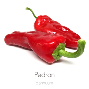 Padron Chilli Seeds (c.annuum)