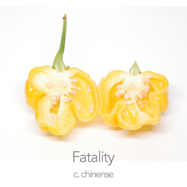 Fatality Yellow Chilli Seeds (c.chinense)