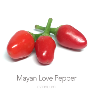 Mayan Love Pepper Chilli Seeds (c.annuum)