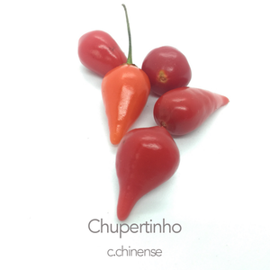 Chupertinho Chilli Seeds (c.chinense)