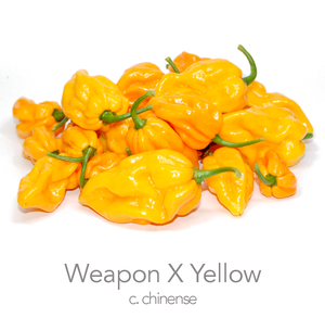Weapon X Yellow Chilli Seeds (c.chinense)