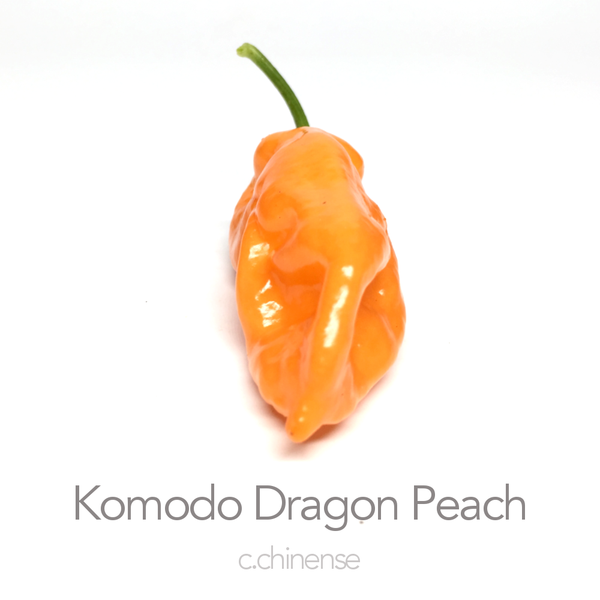 Komodo Dragon Peach Seed (c.chinense)