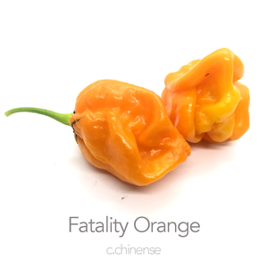 Fatality Orange Chilli Seeds (c.chinense)