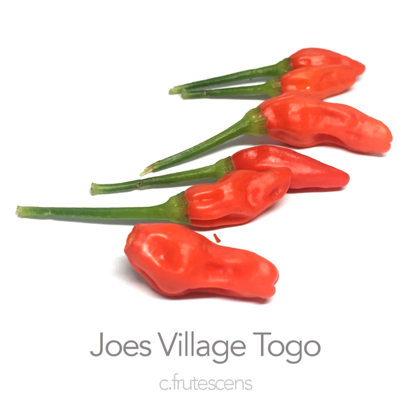 Joes Village Togo Chilli Seeds (c.frutescens)