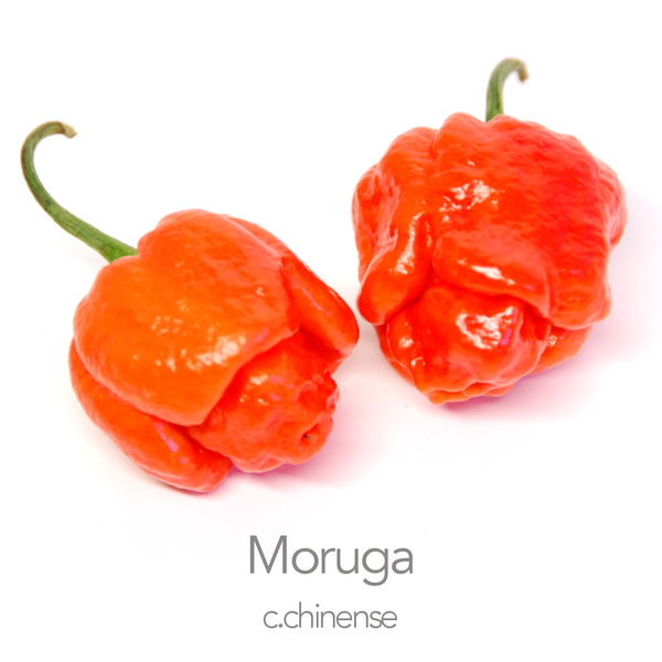 Trinidad Moruga Red Chilli Seeds (c.chinense)
