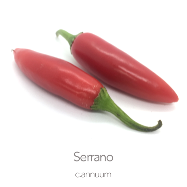 Serrano Chilli Seeds (c.annuum)
