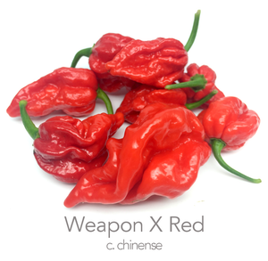 Weapon X Red Chilli Seeds (c.chinense)