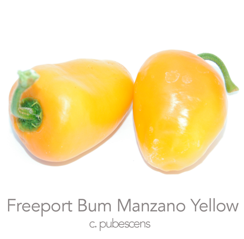 Freeport Bum Manzano Chilli Seeds (c.pubescens)