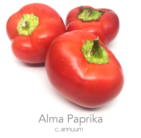 Alma Paprika Chilli Seeds (c.annuum)