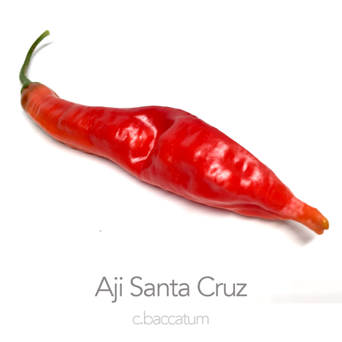 Aji Santa Cruz Chilli Seeds (c.baccatum)