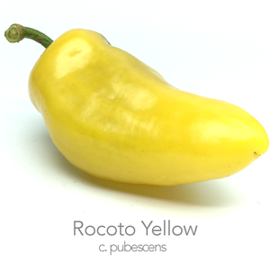 Rocoto Yellow Chilli Seeds (c.pubescens)